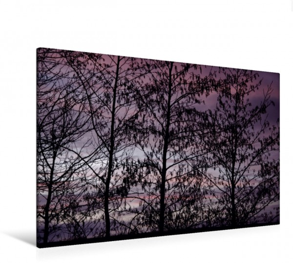 Wandbild Bäume im Licht Winterbäume im mystischen Licht Winterbäume im mystischen Licht