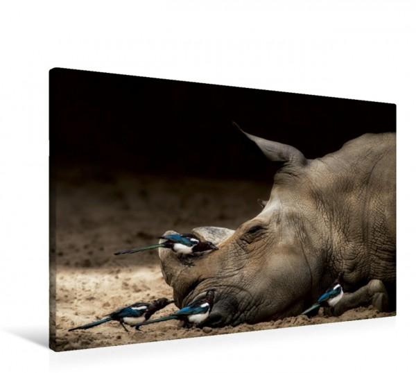 Wandbild Nashorn