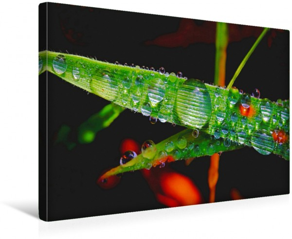 Wandbild Faszination Wassertropfen