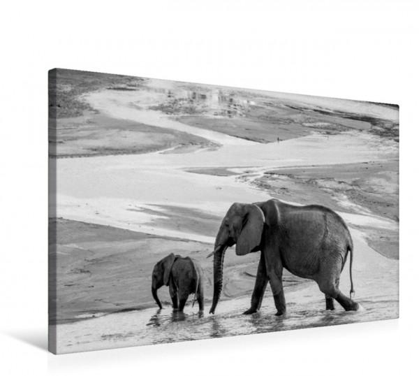 Wandbild Emotionale Momente: Elefanten in black and white