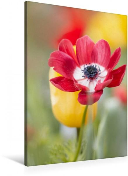 Wandbild Rote Anemone www.madebyulli.de www.madebyulli.de