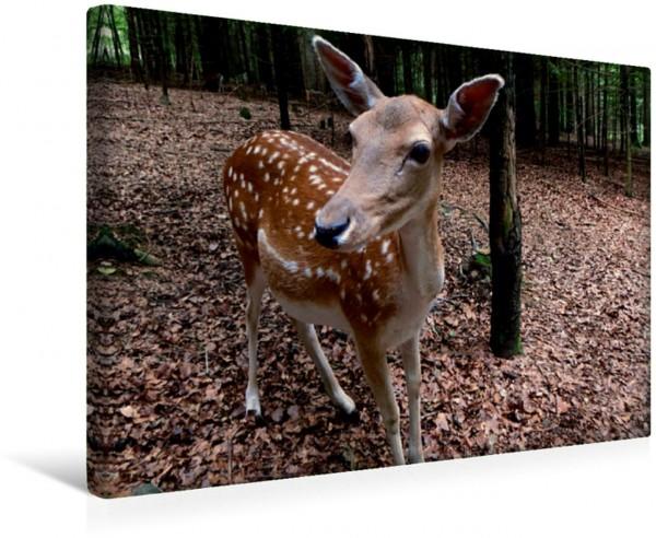 Wandbild Sweet Bambi Getupftes Reh im Wald Getupftes Reh im Wald