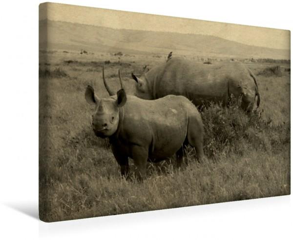 Wandbild Masai Mara Nashörner Wunderbare Begegnung in freier Wildbahn : Nashörner ! Wunderbare Begegnung in freier Wildbahn : Nashörner !