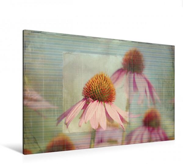 Wandbild Echinacea im vintage look Blumenstillleben Blumenstillleben