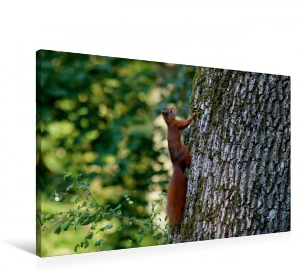 Wandbild Eichhörnchen am Baumstamm Heimische Wildtiere Heimische Wildtiere