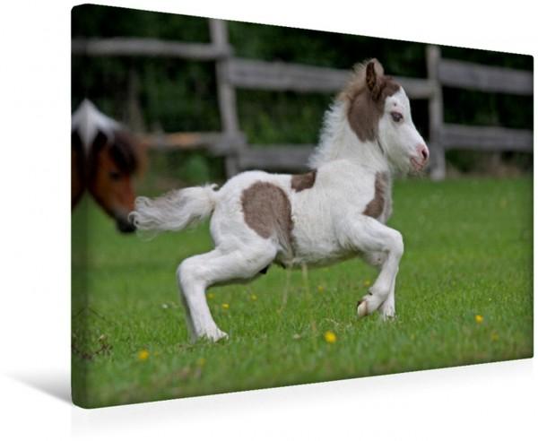 Wandbild Miniatur Horses Fohlen Lebensfreude pur Lebensfreude pur