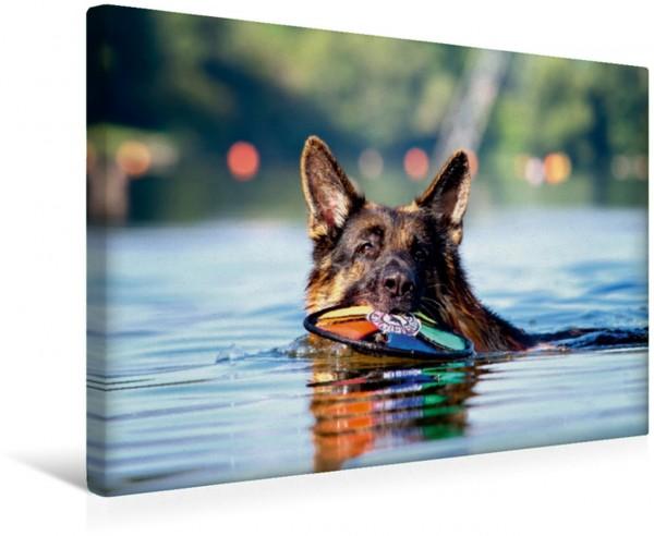 Wandbild Deutscher Schäferhund Nick beim schwimmen Nick beim schwimmen
