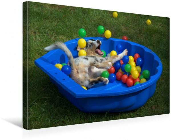 Wandbild Komm doch rein und spiel mit dem Australian Shepherd Welpen Im ausgelassenen Spiel mit den bunten Bällen fühlt sich der zauberhafte Aussie richtig wohl Im ausgelassenen Spiel mit den bunten B