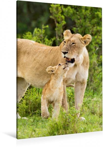 Wandbild Beste Mama der Welt: Liebevolle Löwenmutter mit ihrem Jungen, Löwen Masai Mara National Reserve Kenia Afrika Löwen Masai Mara National Reserve Kenia Afrika