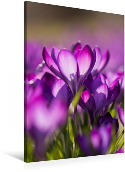 Wandbild Bunte Blumenwelt