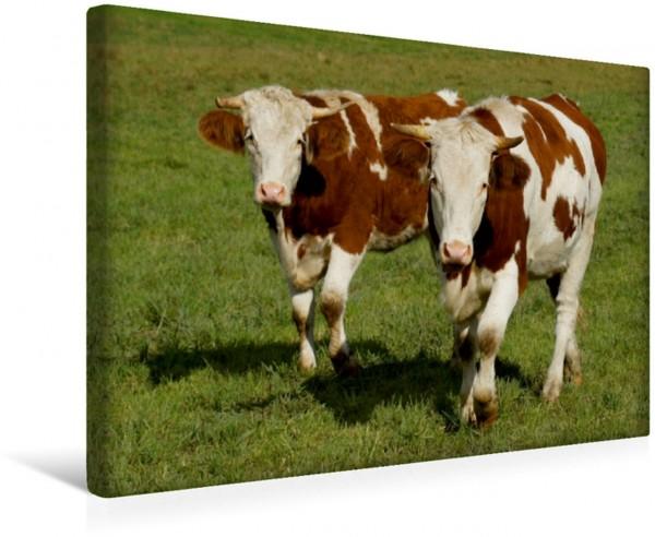 Wandbild Rinder Freunde Kühe und Haustiere Kühe und Haustiere