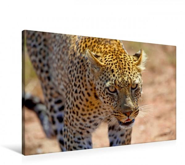 Wandbild Leopard in der Serengeti