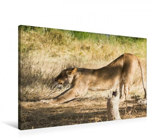 Wandbild Löwin in der Serengeti Tansanias Wilde Tierwelt Afrika Wilde Tierwelt Afrika