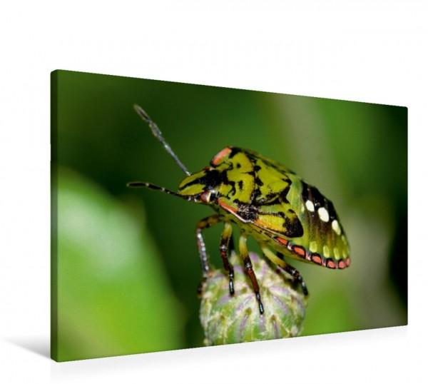 Wandbild Insekten. Faszinierend und wichtig