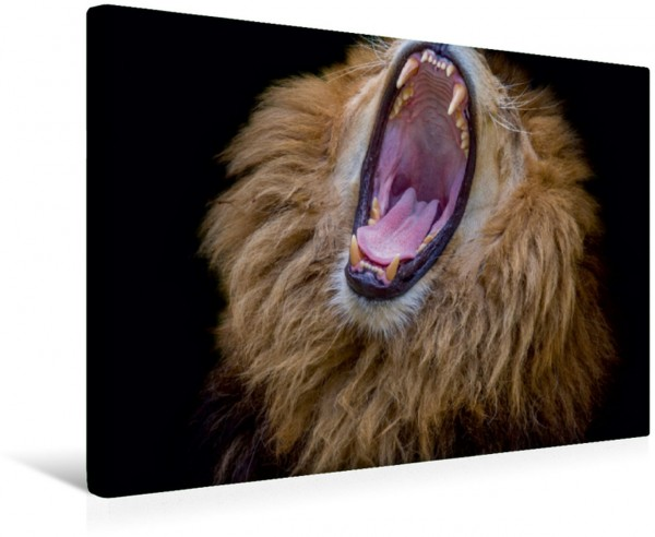 Wandbild Löwen