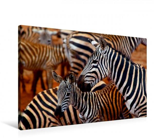 Wandbild Zebras im Tsavo Ost Schwarz Weiss Rot : Zebras im Tsavo Ost. Die Farben der Natur Schwarz Weiss Rot : Zebras im Tsavo Ost. Die Farben der Natur
