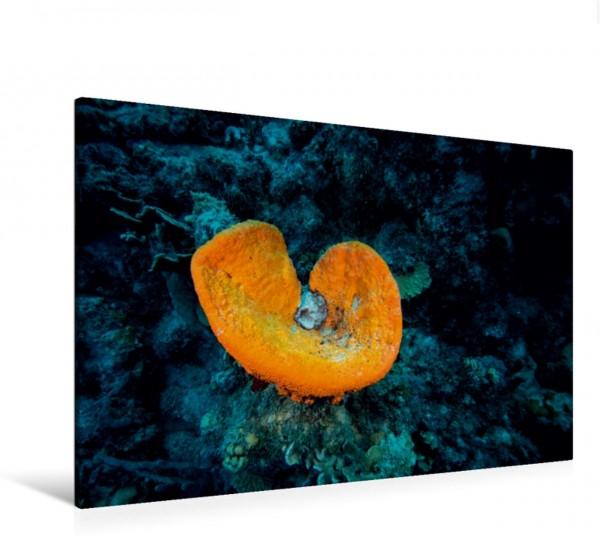 Wandbild Glockenschwamm • Playa Hundu • Curaçao