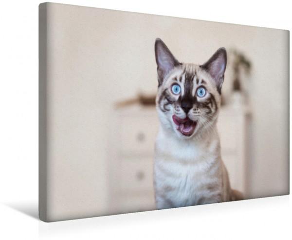 Wandbild Hungrige Bengalkatze