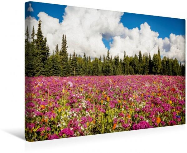Wandbild Blütenmeer bei Kenai Alaska - Wildes Land am Ende der Welt Alaska - Wildes Land am Ende der Welt