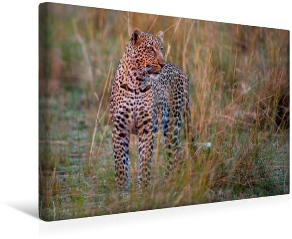 Wandbild Leopard im Abendlicht