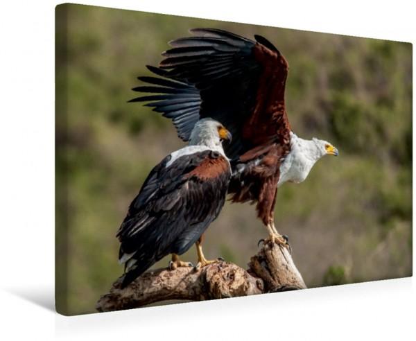 Wandbild Vögel Schreiseeadlerpaar am Nilufer Leinwandbild