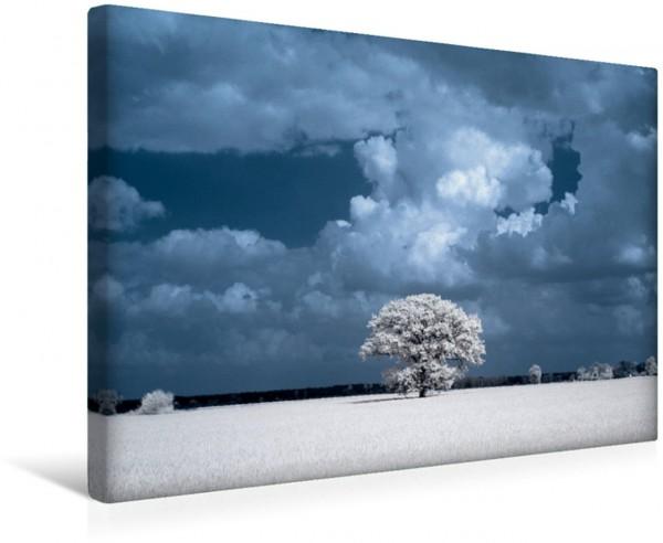 Wandbild Zauberhafte Infrarot-Fotografie - Baum auf dem Feld