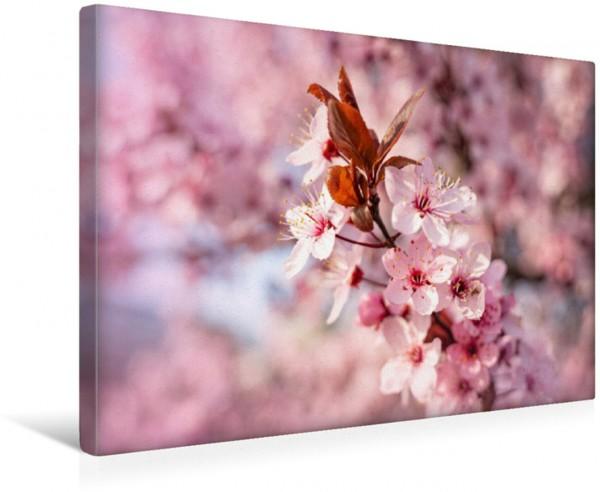 Wandbild Kirschblüten