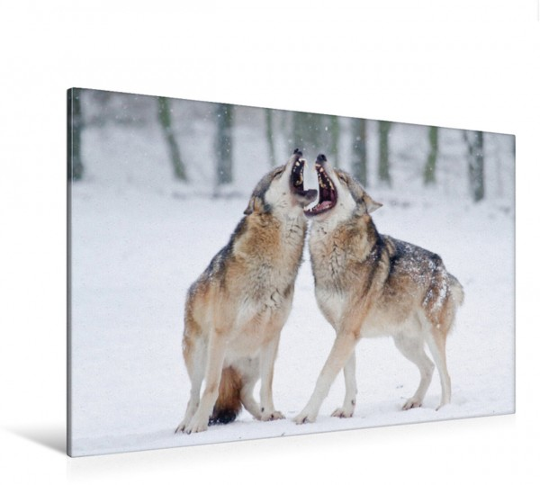 Wandbild Wolf heulende Wölfe Leinwandbild