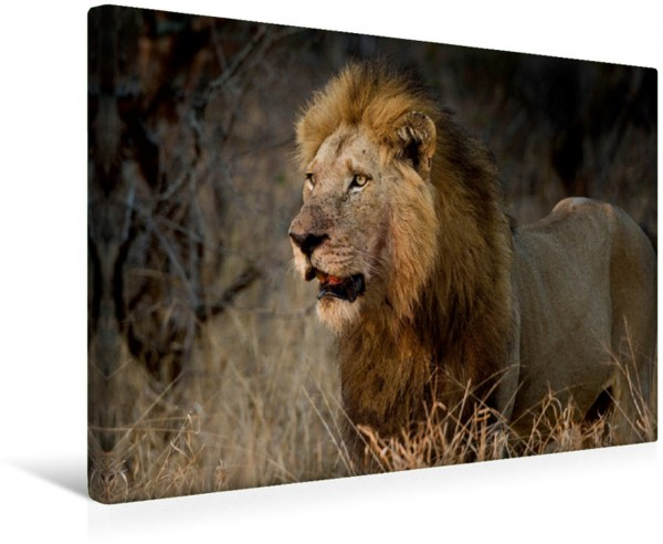 Wandbild Afrikas Tiere im Fokus