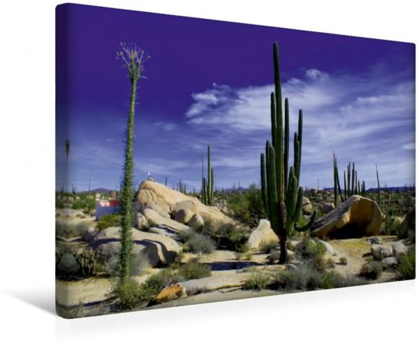 Wandbild Valle de los Cirios Baja California Mexiko Baja California Mexiko