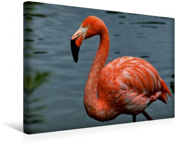 Wandbild Eleganter Flamingo Wasservogel und Vogel Wasservogel und Vogel