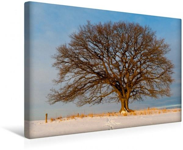 Wandbild Februar: Noch ist es bitterkalt. Nur die Morgensonne bringt ein bisschen Wärme.