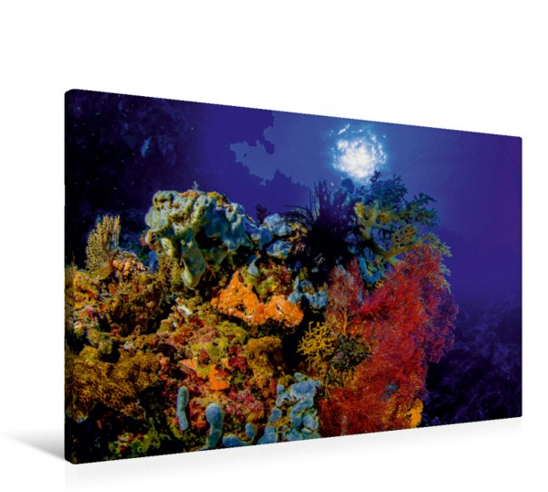 Wandbild Korallenriff vor Sulawesi Indonesien