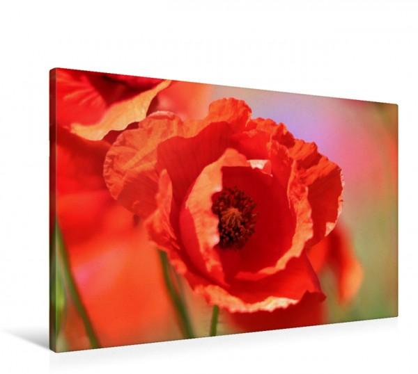 Wandbild Klatschmohn ganz nah Mohn zarte Blüten starke Farben Mohn zarte Blüten starke Farben