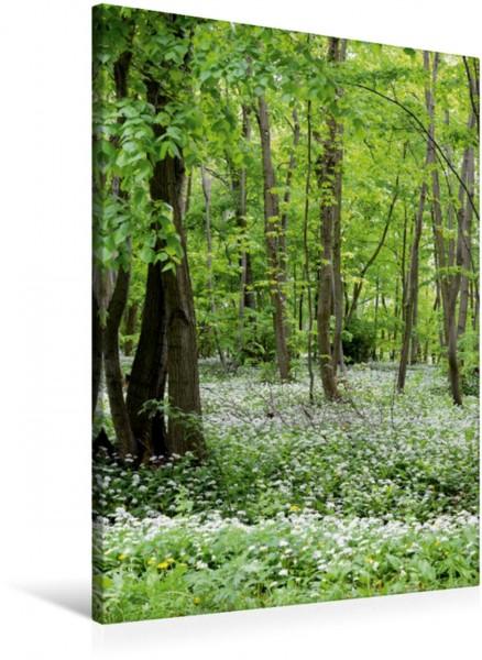 Wandbild Bärlauchwald Wald mit Bärlauch in voller Blüte Wald mit Bärlauch in voller Blüte