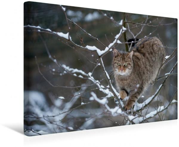Wandbild Wildkatze