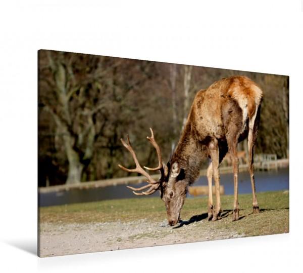 Wandbild Könige des Waldes - Hirsche