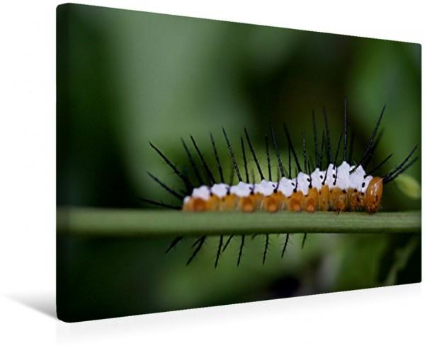Wandbild Schmetterlings-Raupe Farbenpracht Farbenpracht