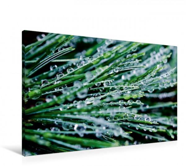 Wandbild Wasserperlen