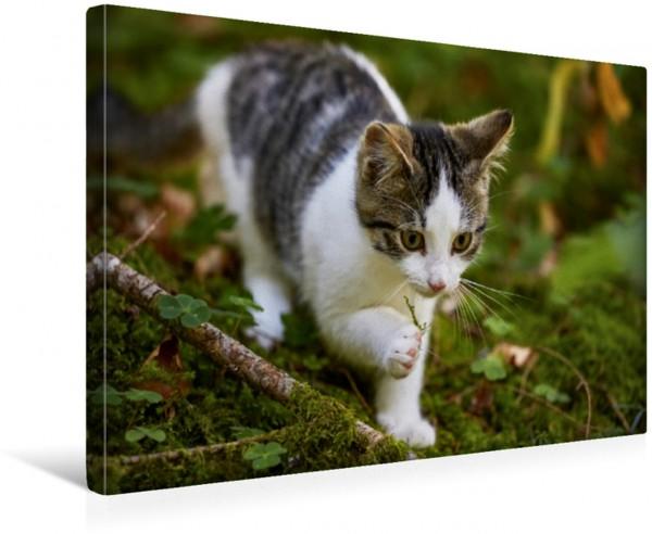 Wandbild Das Spiel mit dem Moos. Kitten im Wald Kitten im Wald