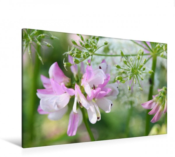 Wandbild Bunte Kronwicke Wildblume Wildblume