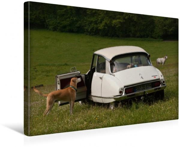 Wandbild Macht auch abseits der Straße eine gute Figur Citroën DS Citroën DS