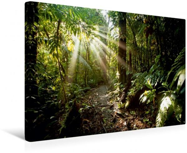 Wandbild Sonnenstrahlen im Urwald Costa Rica