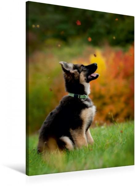 Wandbild Deutscher Schäferhund Jacky im Herbst Jacky im Herbst