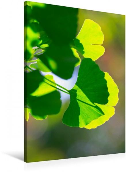 Wandbild Ginkgoblätter durchleuchtet