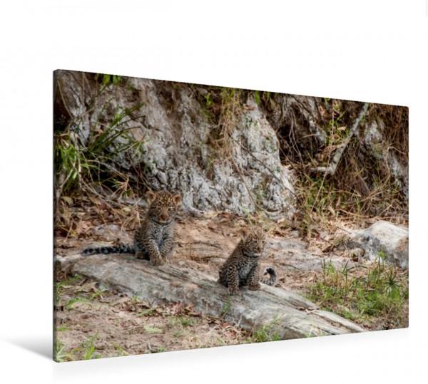 Wandbild Emotionale Momente: Leoparden Leopardenbabys Leopardenbabys