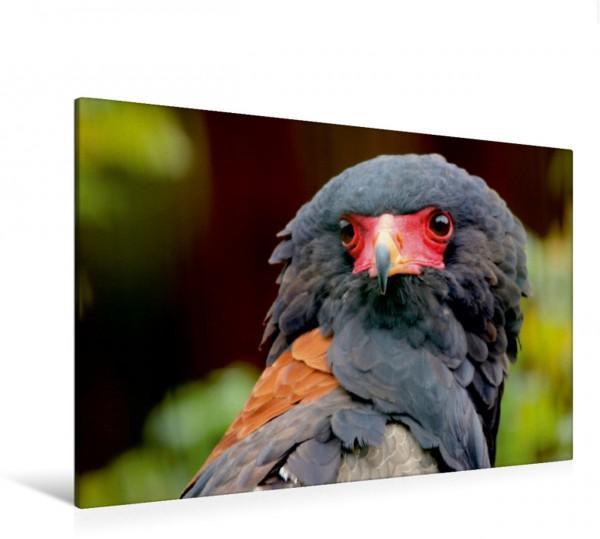 Wandbild Greifvögel - Gaukler
