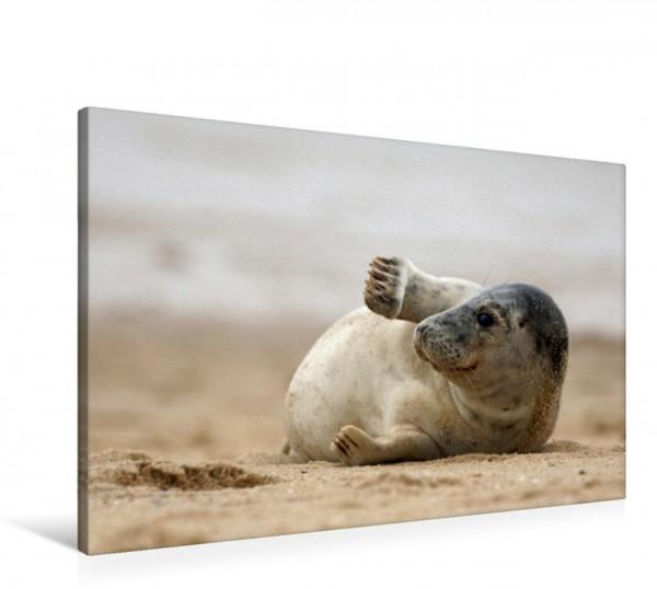 Wandbild Sylt ist Meer Seehund am Strand von Sylt Seehund am Strand von Sylt