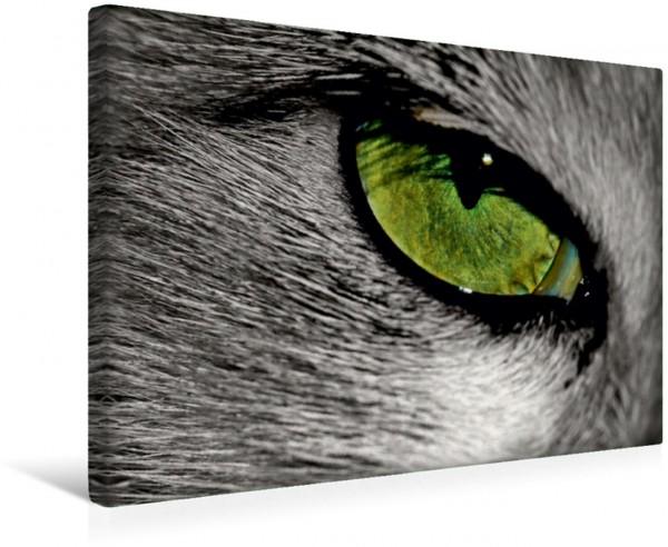 Wandbild Tiere - Grüne Augen