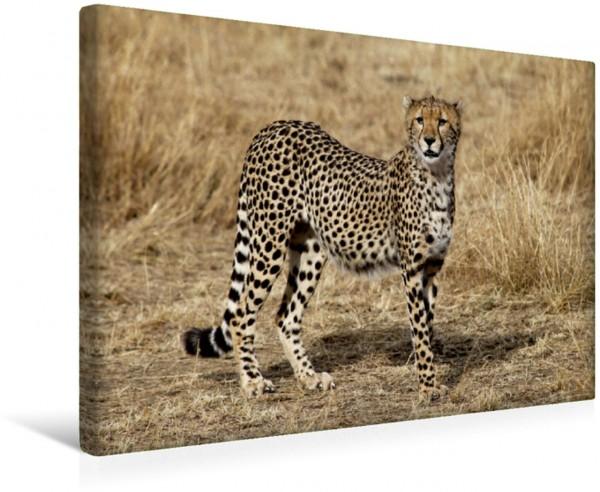 Wandbild Gepardin in der Savanne Kenias Gepardenleben in der Masai Mara Gepardenleben in der Masai Mara